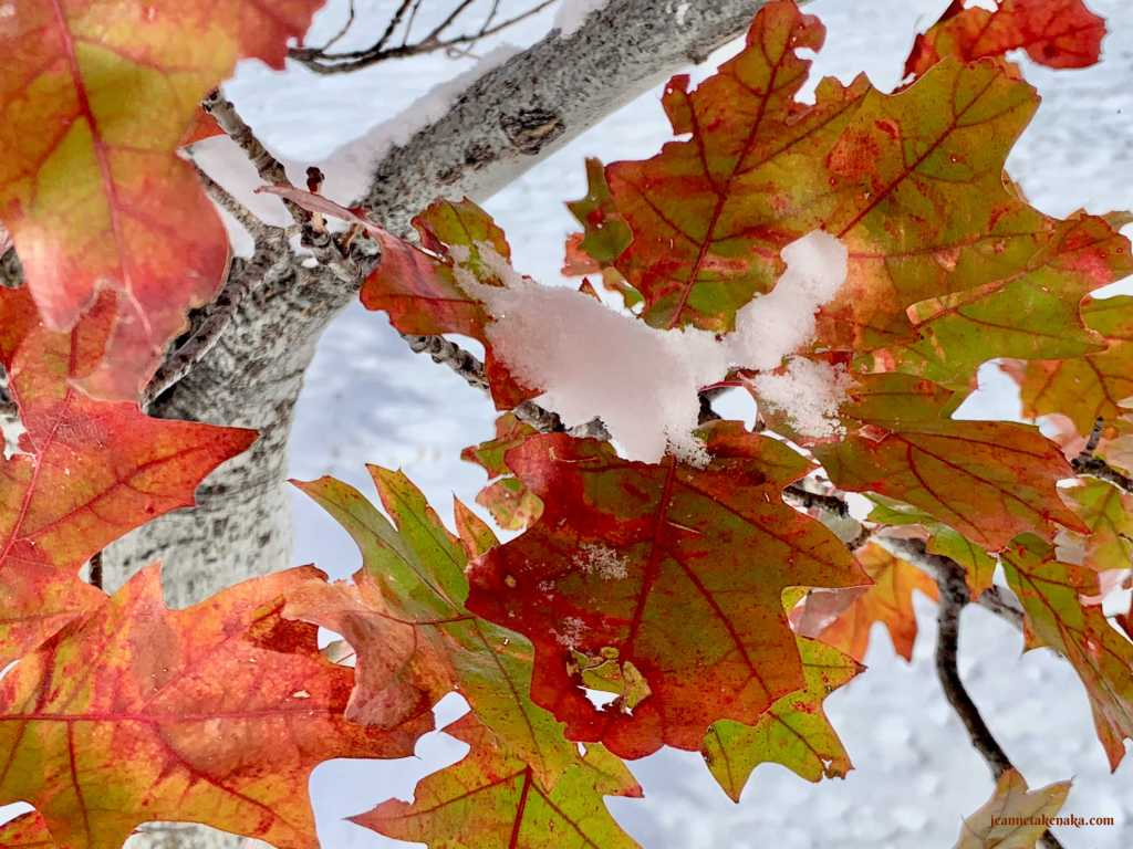 Colorful leaves holding snow remind one that even in hard seasons there is beauty and rest