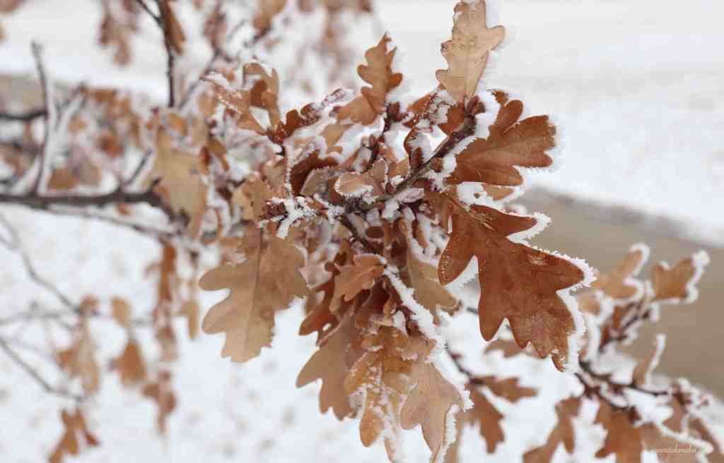A cluster of oak leaves, symbolic of how a fear of loss can bring thoughts that cluster in our thoughts