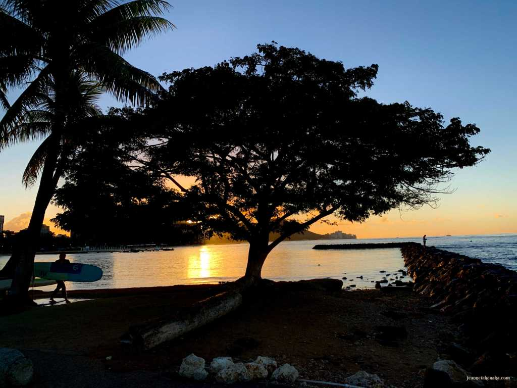 A silhouette of a tree at sunrise near the ocean