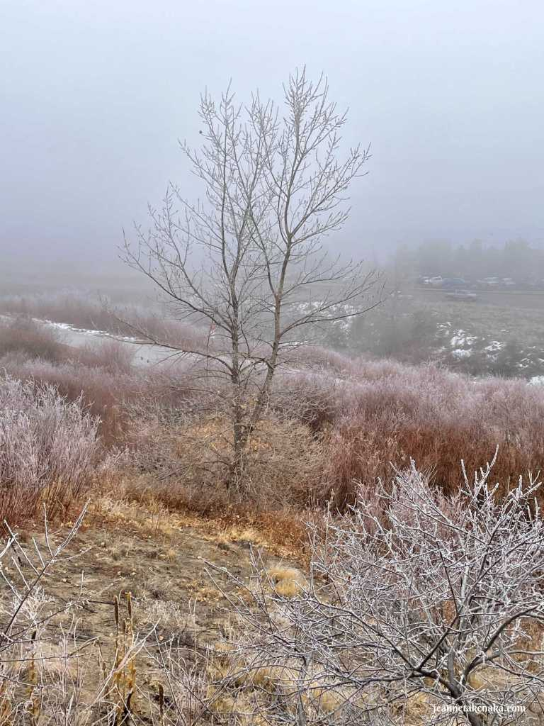 A lonely tree on a wintry, foggy day, symbolic of how fear sometimes makes us feel