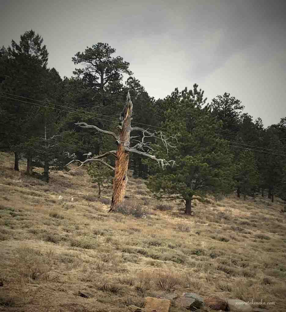 A dead tree standing on a hillside...a visual for how we sometimes feel when we are disappointed in God's ways, when God feels distant