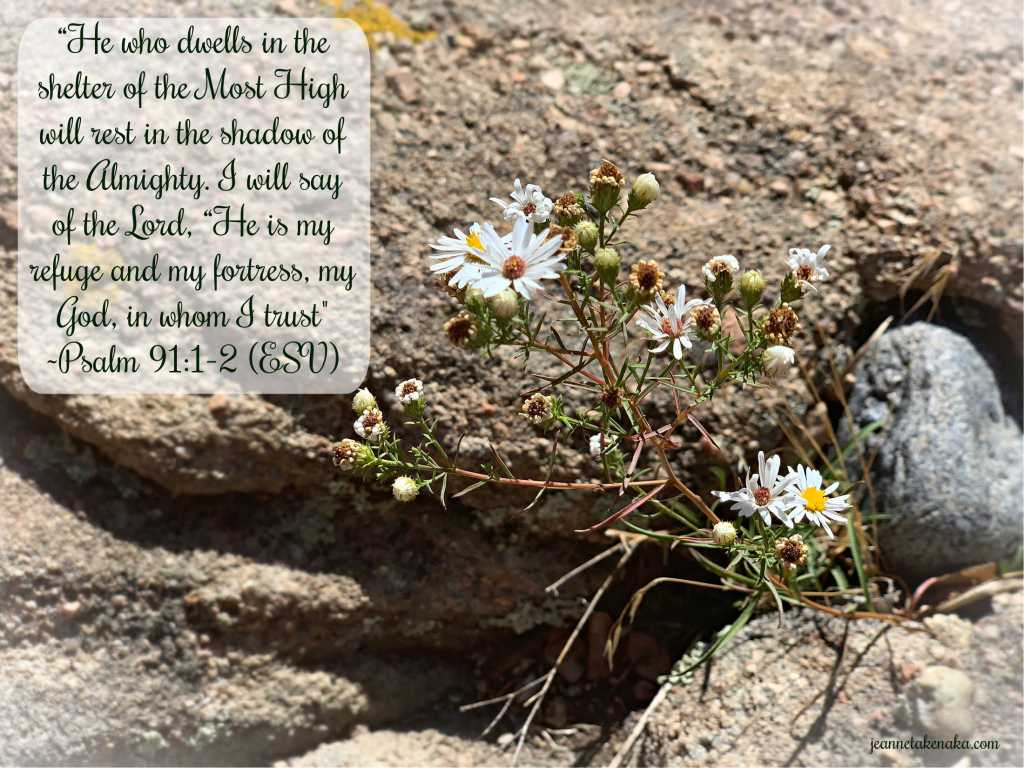 """Meme that says, """"He who dwells in the shelter of the Most High will rest in the shadow of the Almighty. I will say of the Lord, 'He is my refuge and my fortress, my God in whom I trust."""" ~Psalm 91:1-2 (ESV) on a backdrop of wildflowers growing from a rocky crevice"""