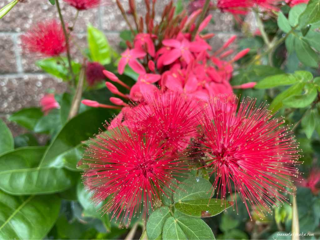 Red flowers, a reminder that there is beauty in the process of pursuing dreams