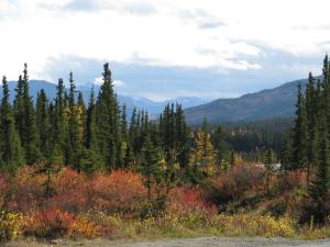Autumn in Denali 2