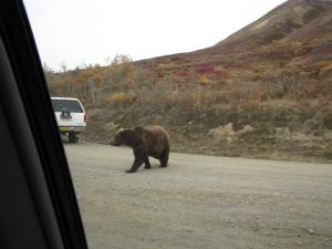 Bear crossing in front of us