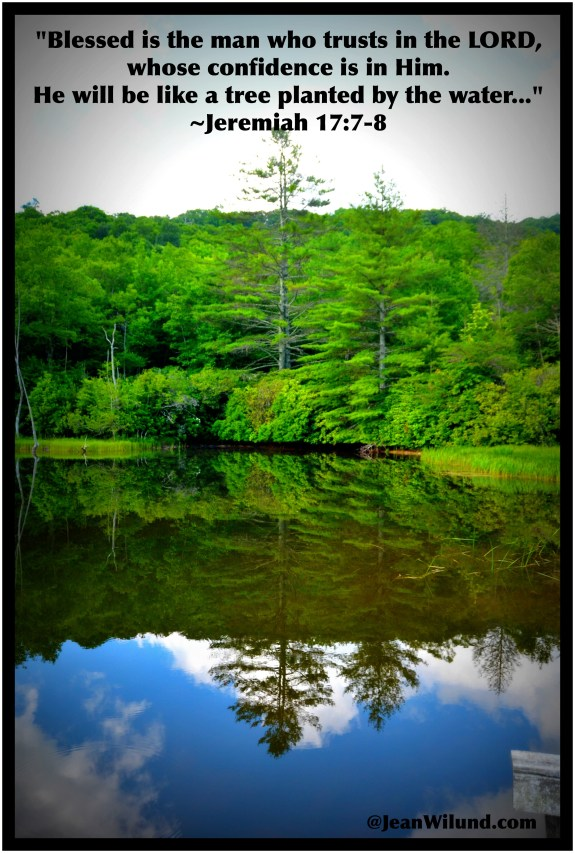 Jeremiah 17:7-8 ~ Like trees planted by springs of water . . .