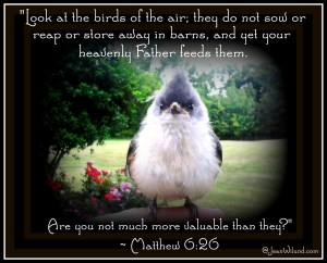 """Praise Picture: Need encouragement in hard times? """"Look at the birds of the air!"""" Matthew 6:26"""