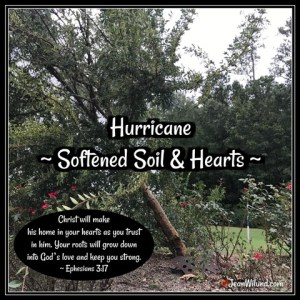 Hurricane Softened Soil & Hearts — When a Hurricane actually did something good. www.jeanwilund.com