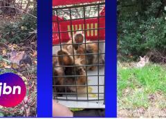 Nieuwerkerkers redden gedumpte konijntjes