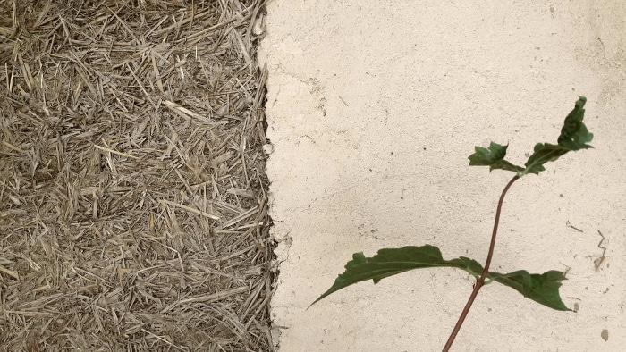 Mur en terre-paille : avantages et inconvénients