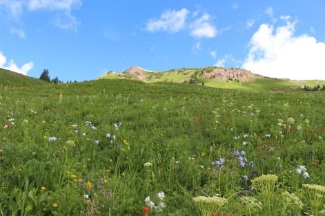 Wildflower Meadow - https://doi.org/10.1111/1365-2745.12701