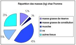 masse_grasse_homme