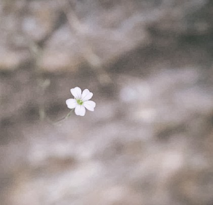 flower-jedan-frajer-i-bidermajer.jpg