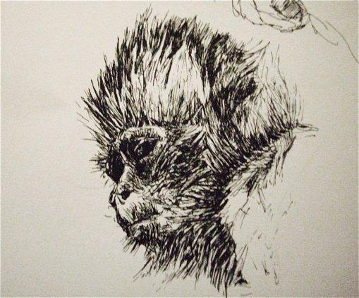 ape_sketch_by_zombiraptor-d45yi1k