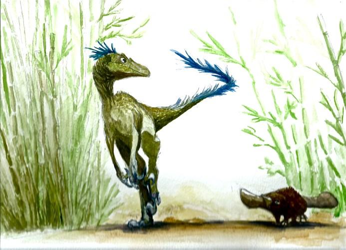 raptor et platypus bambouseraie 2