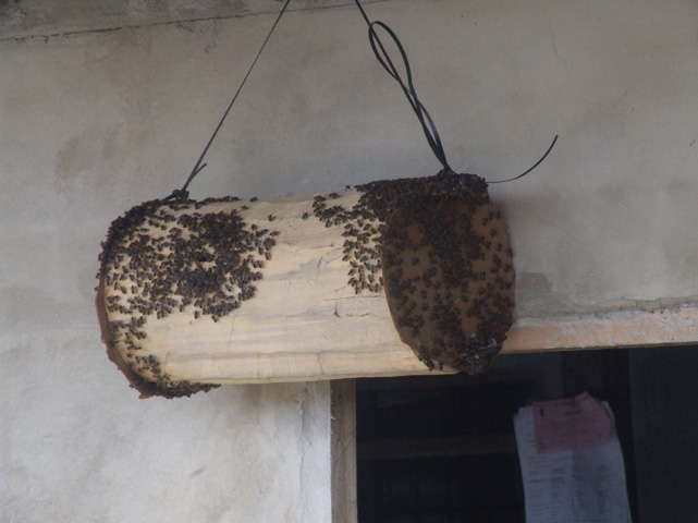 One of the bee hives suspended unde the longhouse balconies.