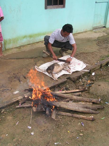 Pig preparation.