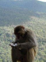 Zaczytany małpiszon