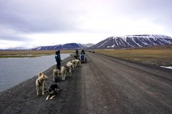 Przejażdżka psim zaprzęgiem