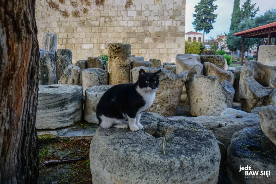Limassol - kot