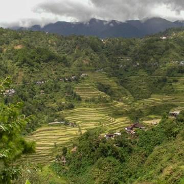 Tarasy ryżowe w Banaue - Filipiny