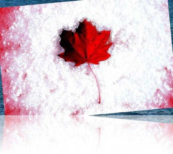 Canada Day 2011 Maple Leaf Shireen Jeejeebhoy 2011-07-01