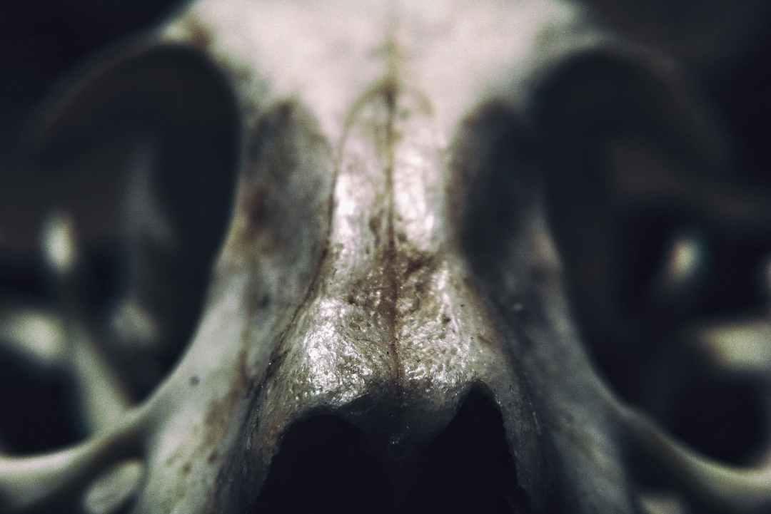 abstract anatomy art blur