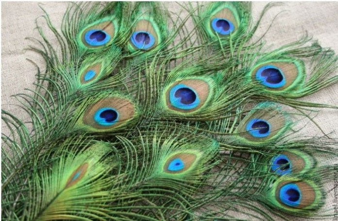 Benefits Of Putting Peacock Feather In Photo Frame