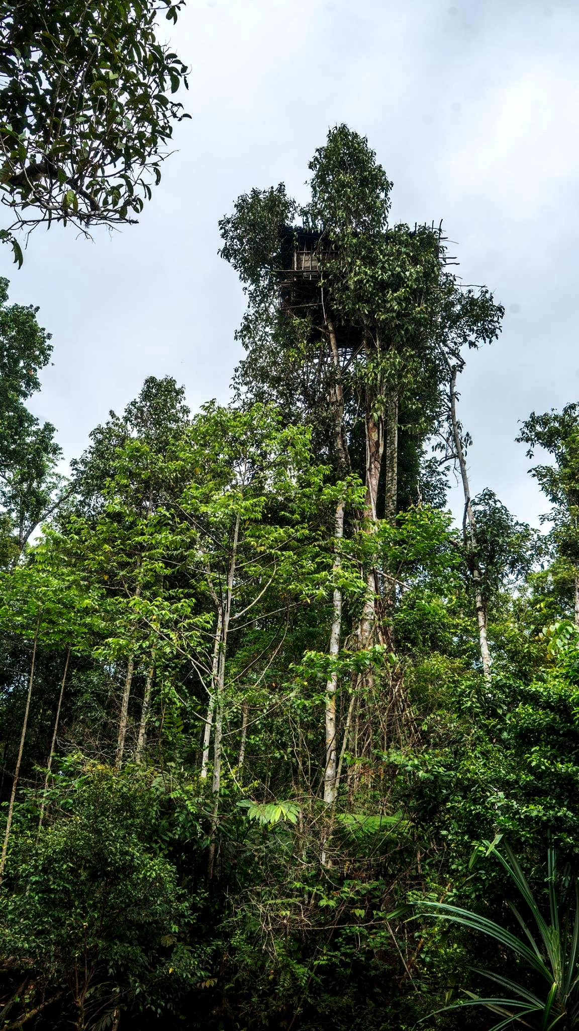Korowai Tree House Baliem Valley Festival 2020 Jefalgi Papua Tours