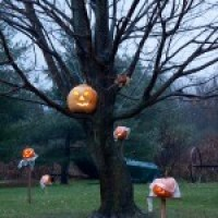 Cilley Hill Pumpkin Festival