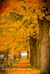 I love to shoot in a cemetery is that the grounds are well cared for and outside of the leaves on the ground which actually enhances the image