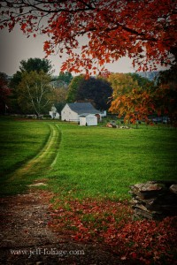 tractor path leads to white barns on a Connecticut farm with fall foliage on the ground