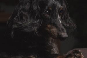 Houston Photographer – Dog
