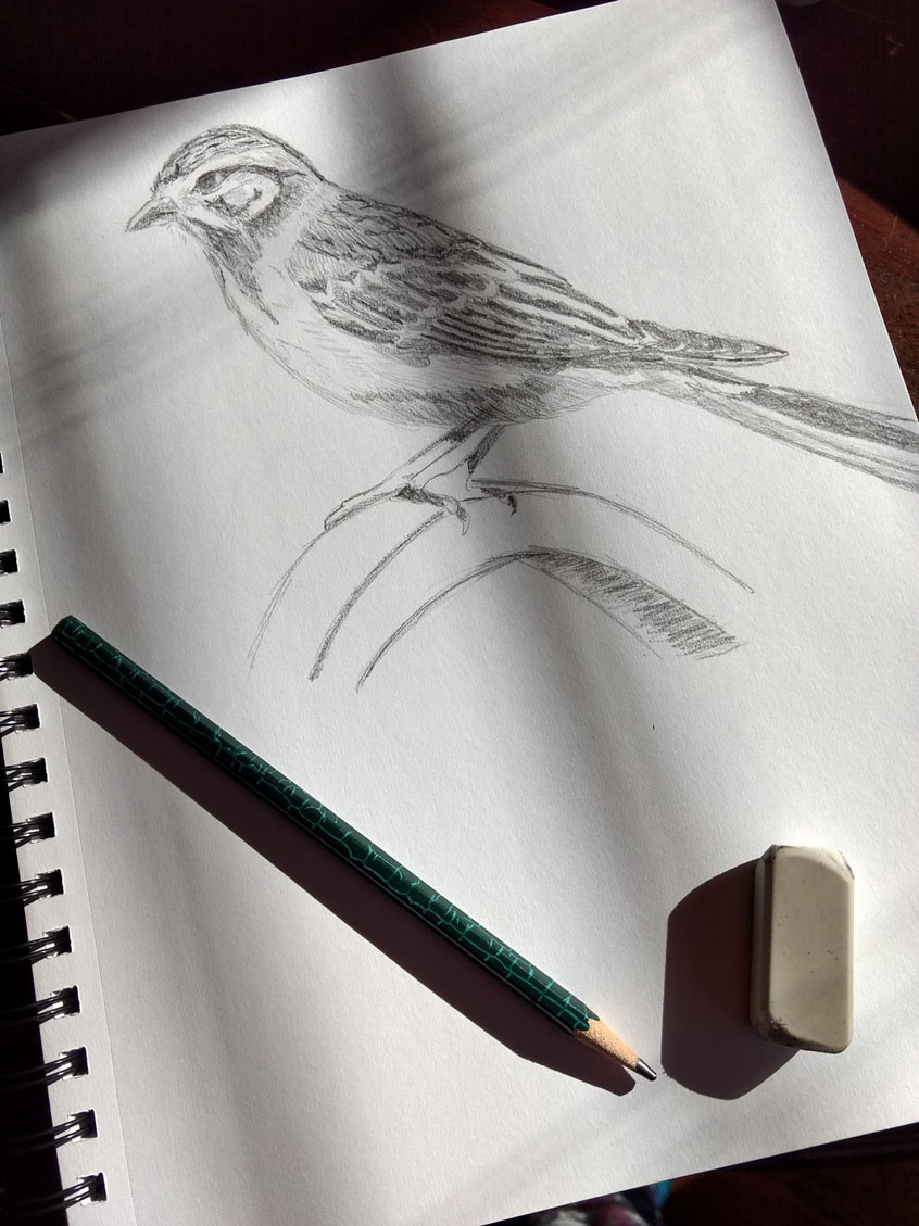 A pencil sketch by Jeffcoat Art of a sparrow perching on a feeder pole. Sketchbook has pencil and eraser set on it. Natural light from the window is shining on sketchbook.