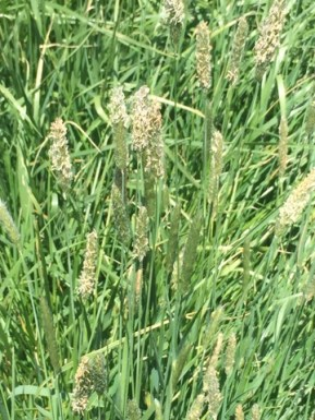 grasses, holistic planned grazing