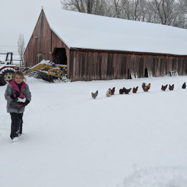 Our chickens provided us with eggs through the late winter and early spring months.