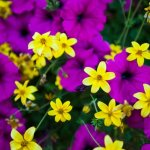 Photo of Yellow and Purple Flowers