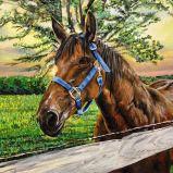 Equestrian Glow   Acrylic on Canvas