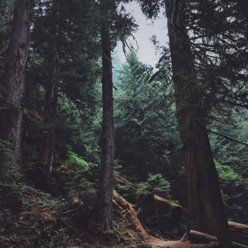 Jedidiah Forest