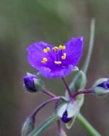 (Please help identify this flower) June, Billings Rimrocks