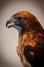Raptors 20140112---005