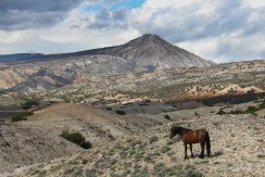 Wild mustang and Sykes Ridge
