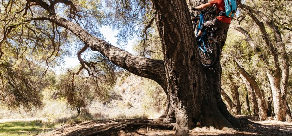 Jeff Kendall-Weed goes for a trials move on his mountain bike in a tree