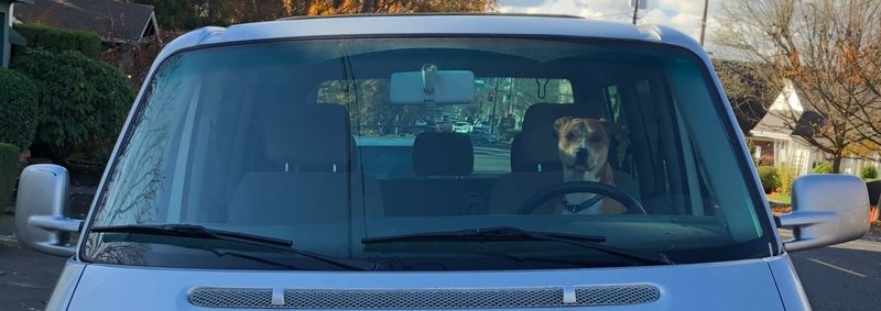 Driving Dog portland