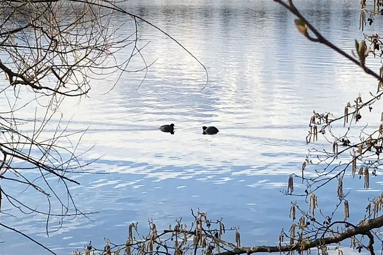 waterbirds approaching