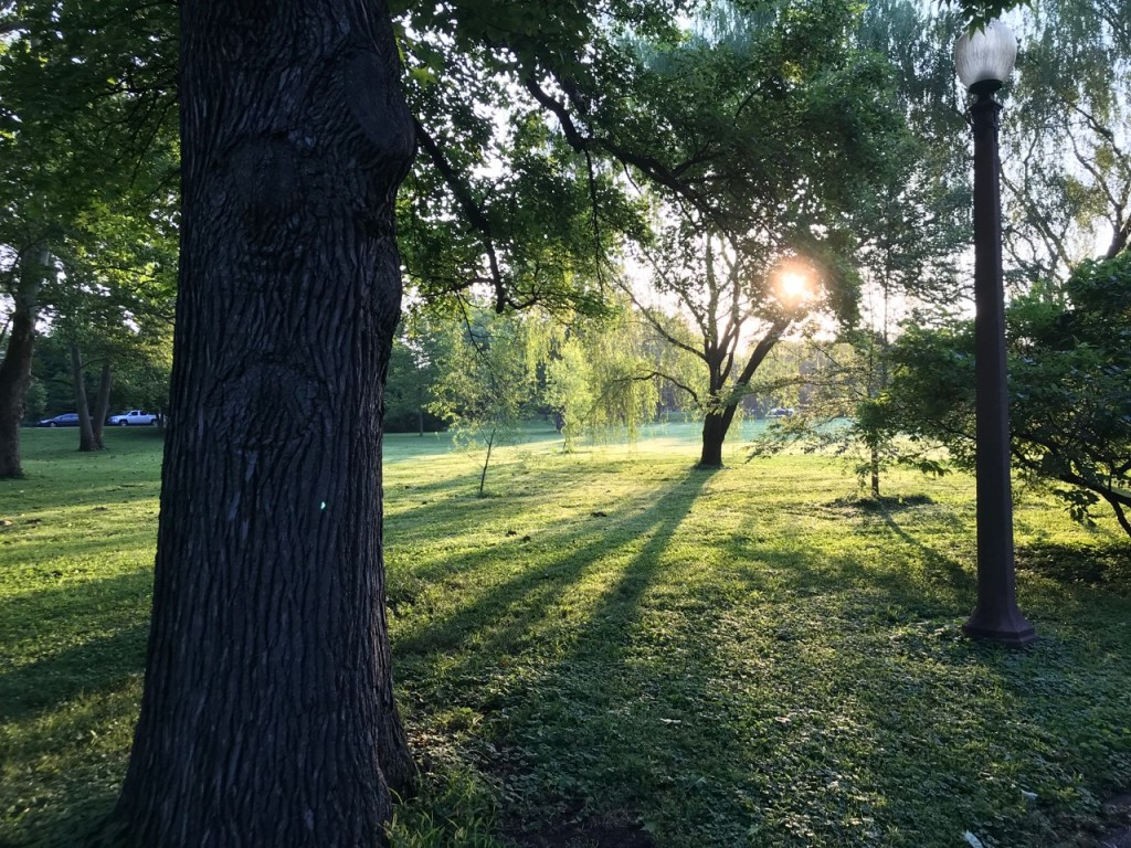Photo of sunrise in Tower Grove Park, July 2019