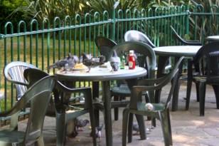 Pigeon feast.