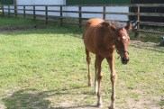 A young foal. She wanted some attention.