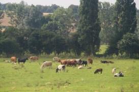 Bucolic pasture scene.