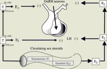 Clomid Clomiphene for Males Increases LH FSH Testosterone
